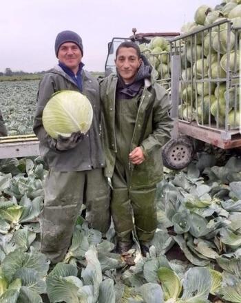 Landbouw oogst personeel voor agrarische bedrijven
