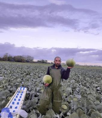 Kool plukker en verwerker landbouw bedrijf