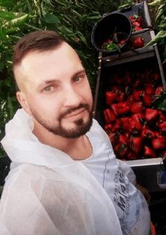 Oost-Europese paprika oogst verwerkers