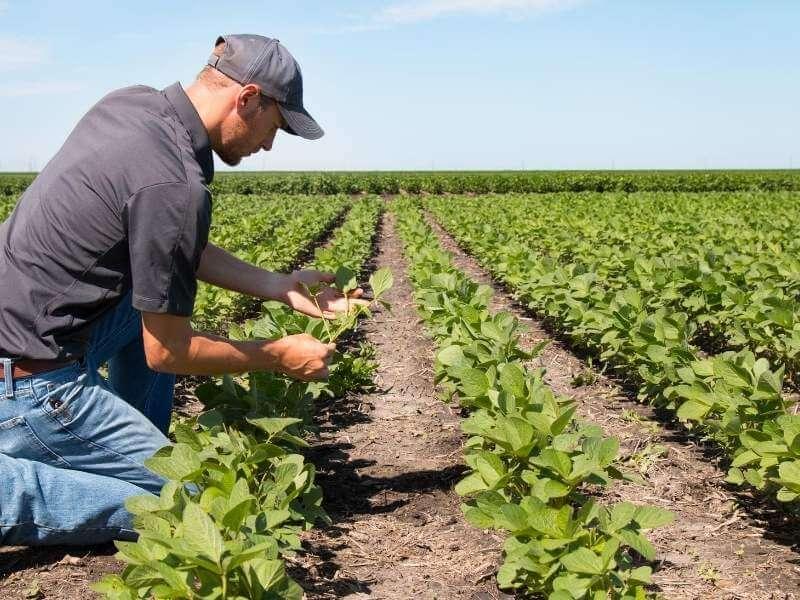 payroll voor de landbouw, glastuinbouw, techniek en food sector