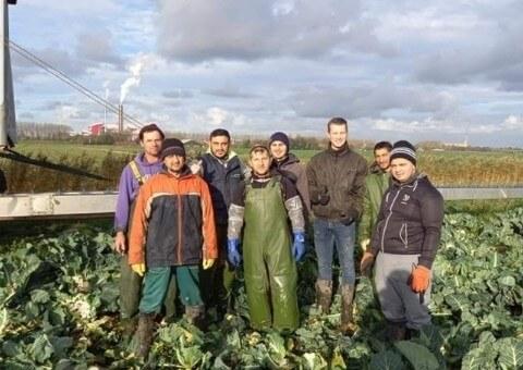 Poolse oogstmedewerkers