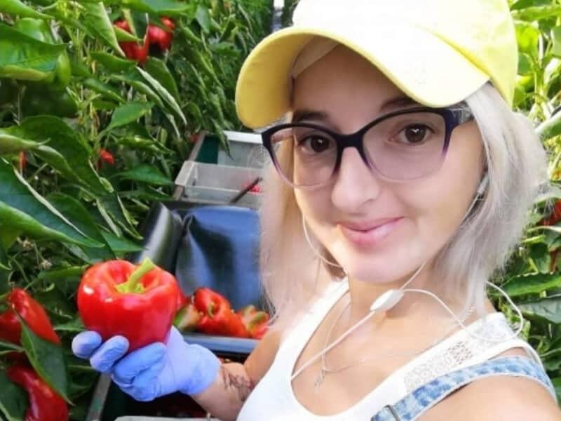 Uitzenden van personeel in de teelt en oogst van seizoengroenten en fruit