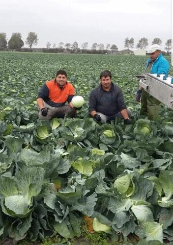 Het uitzendbureau voor werving en selectie van agrarisch personeel